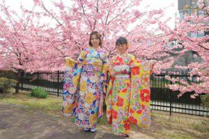 京都淀の河津桜と振袖