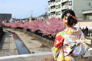 振袖で京都の淀水路の河津桜へ