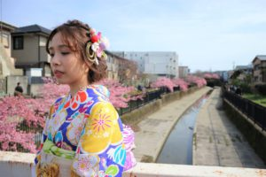 淀水路の桜と青の振袖