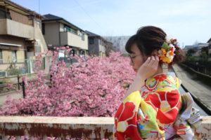 京都の淀水路の河津桜とイエローの振袖