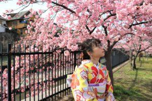 淀水路の桜と黄色の振袖