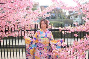 京都の淀水路の河津桜とブルーの振袖
