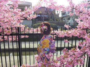 京都の淀の河津桜に囲まれて