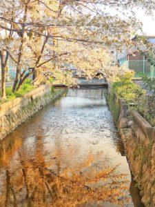 京都の桜のある風景