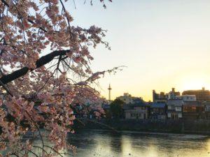 京都の桜と川