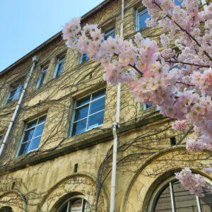 趣のある京都の桜
