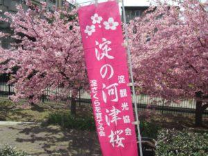 京都の淀の津桜と