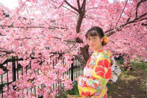 京都の淀水路の桜とイエローの振袖