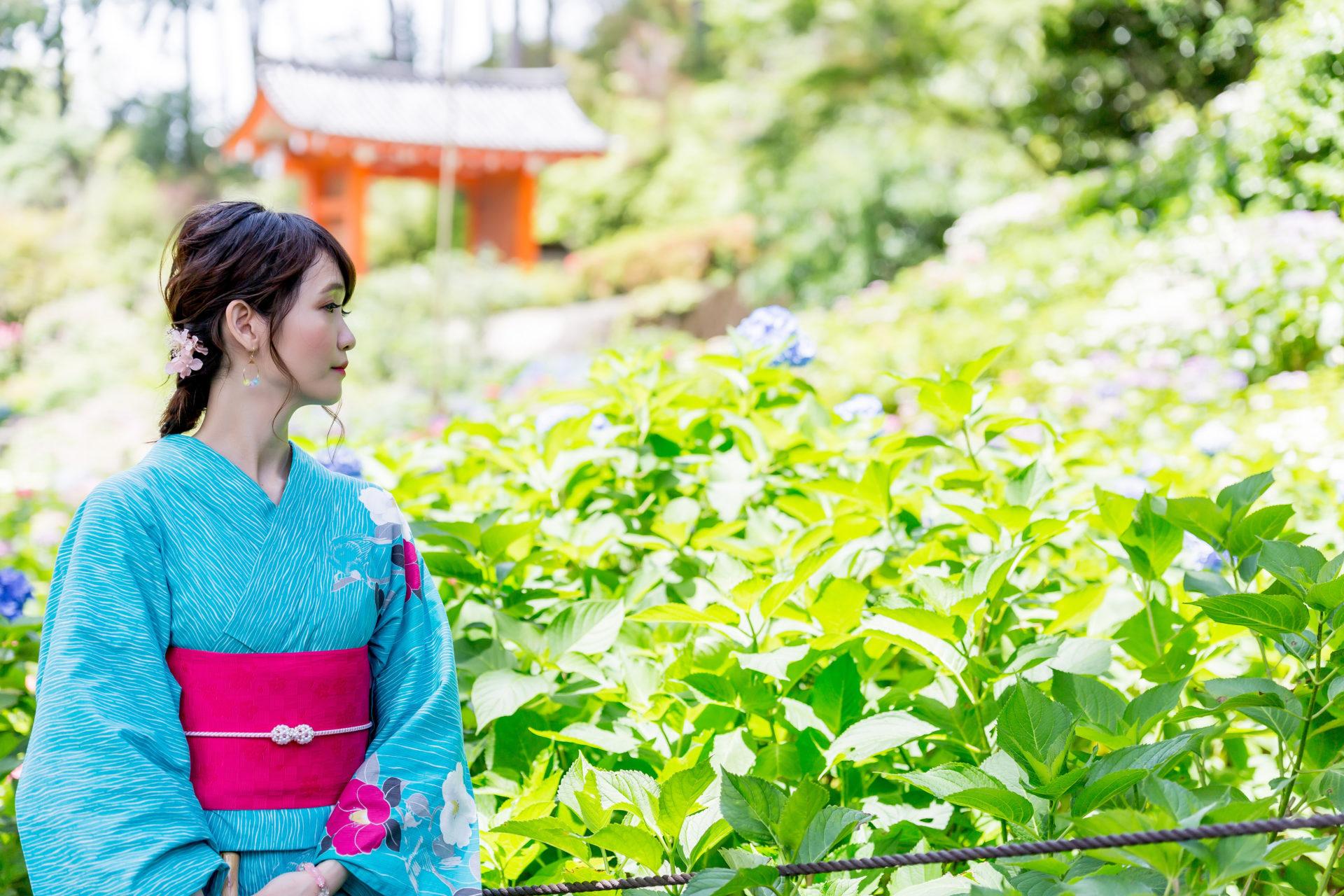 京都宇治三室戸寺のあじさいと浴衣